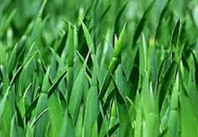 Yes, you are required to cut the grass in your yard – except when it might hurt environment