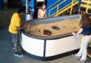 Shark Awareness Day at Nauticus – July 31